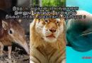 இந்த 10 அழகான விலங்குகளை இன்னும் கொஞ்சம் நாள்களில் நீங்கள் பார்க்க முடியாதாம் தெரியுமா ?